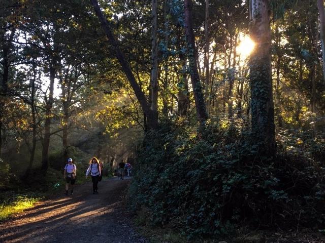 Bosque en As Quintas - Camino Francés, por Stephan Galozzi