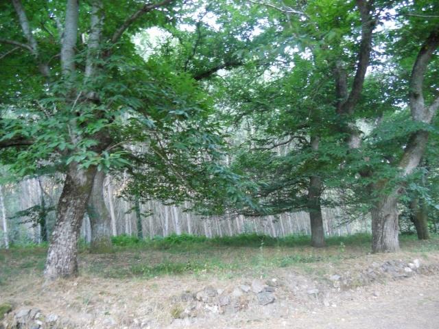 Bosques de Arzúa