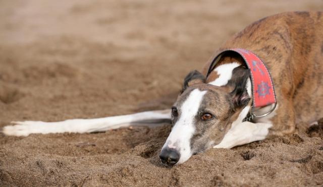 Cada vez se abandonan más perros en el Camino de Santiago
