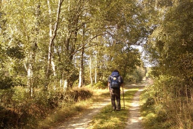 Camiñante chegando a Vilalba - José Antonio Gil Martínez (Flickr)