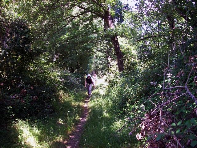 Camino de Friol