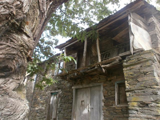Castanheiro e casa (foto: Paulo Antunes)