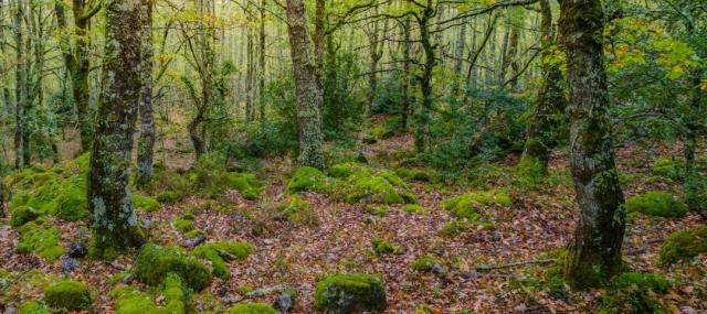 El Espíritu del Peregrino: La huella más profunda del Camino de Santiago