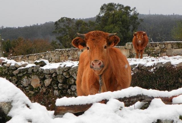 Galicia nevada