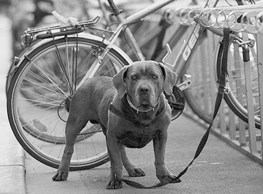 Hacer el Camino con tu perro (II)