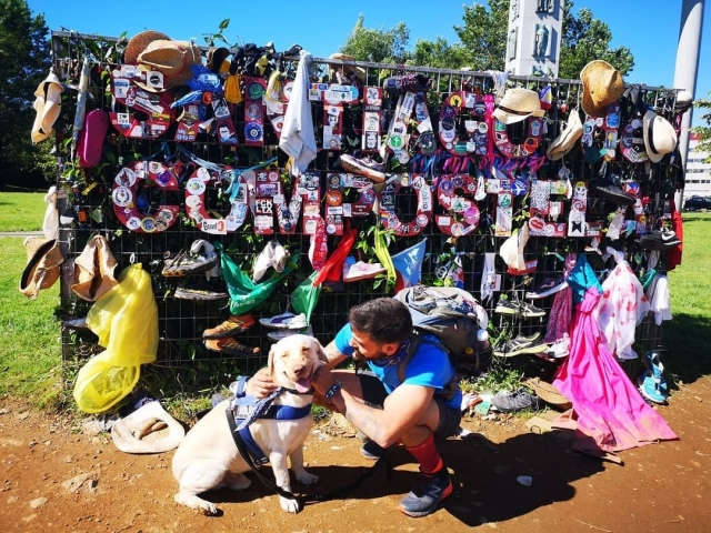 Hacer el Camino de Santiago con perro: todo lo que debes saber
