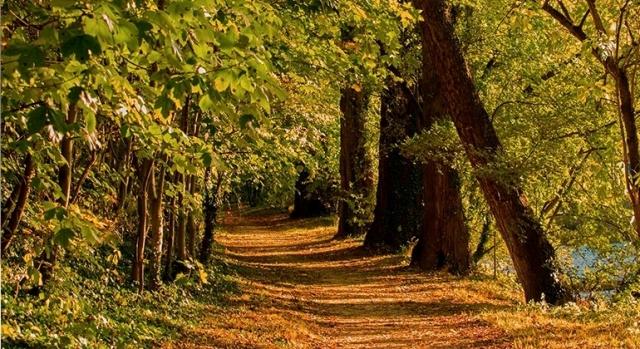 Hacer el Camino de Santiago en otoño