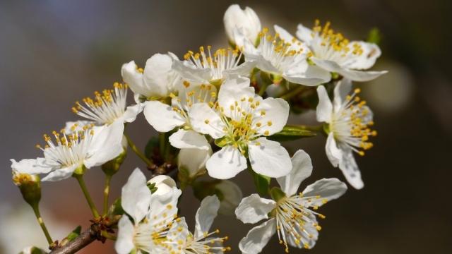 Hacer el Camino en primavera