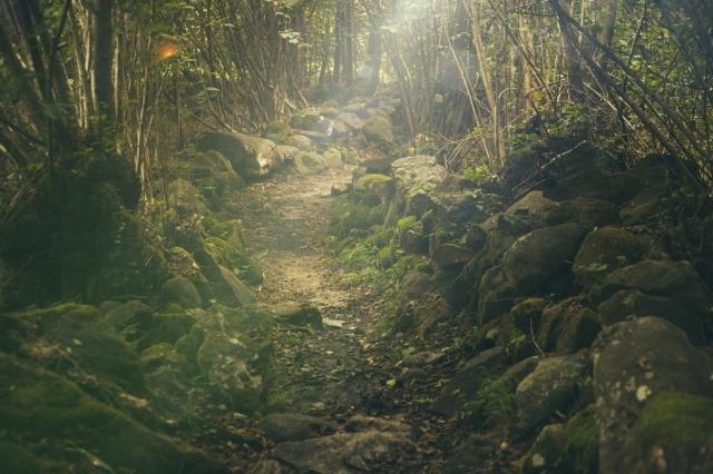 Naturaleza en el Camino