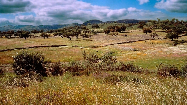 Parque Natural de la Sierra de Aracena y Picos de Aroche