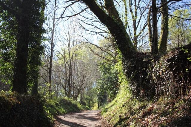 Rincón del Camino
