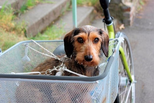 También puedes acoplar una cesta para transportar a tu perro en bici