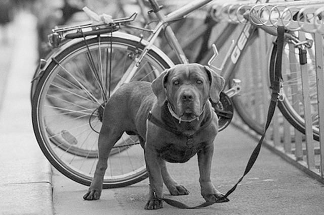The Camino de Santiago with a dog
