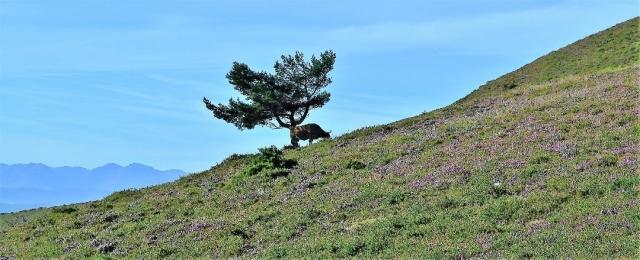 Unión entre la naturaleza y el reino animal.