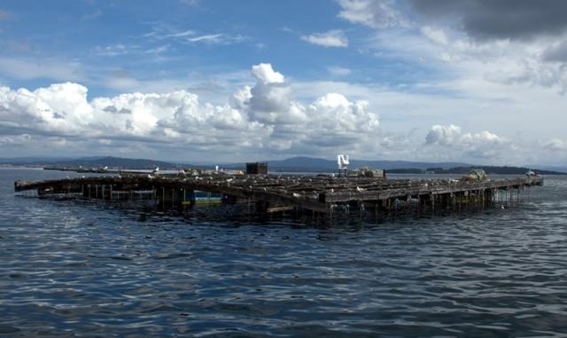 y los puertos pesqueros de Escarabote y Cabo de Cruz. A estribor se divisa un lugar fascinante, A Illa de Arousa.
