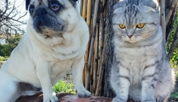A dog and a cat complete the Camino de Santiago without fighting