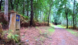 How many pilgrims plan to come back to the Camino de Santiago in 2018?