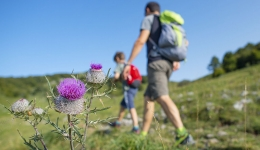 How to organize the Camino de Santiago? Our advice