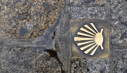 The pilgrim shell: the origin of the symbol of the Camino
